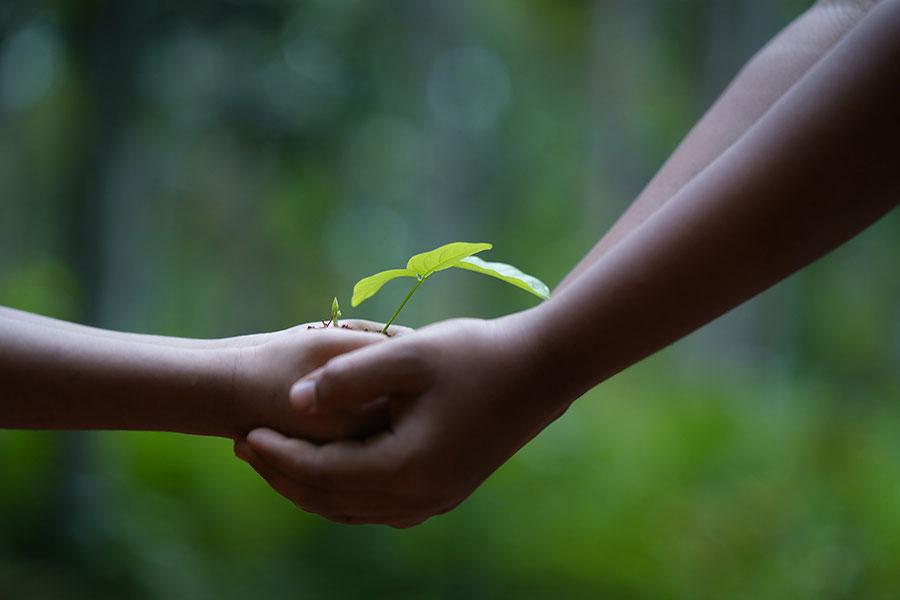 12 practici ecologice care pot salva atât mediul ȋnconjurător, cât şi bugetul de familie